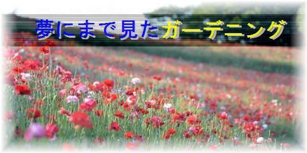 garden_f