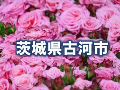 茨城県古河市のふるさと納税人気返礼品TOP10を聞いてみた!