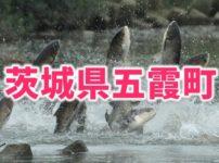 茨城県五霞町のふるさと納税人気返礼品TOP5を聞いてみた!