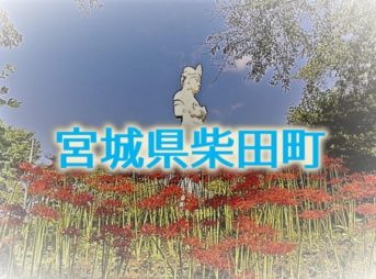 宮城県柴田町のふるさと納税返礼品TOP10まとめ